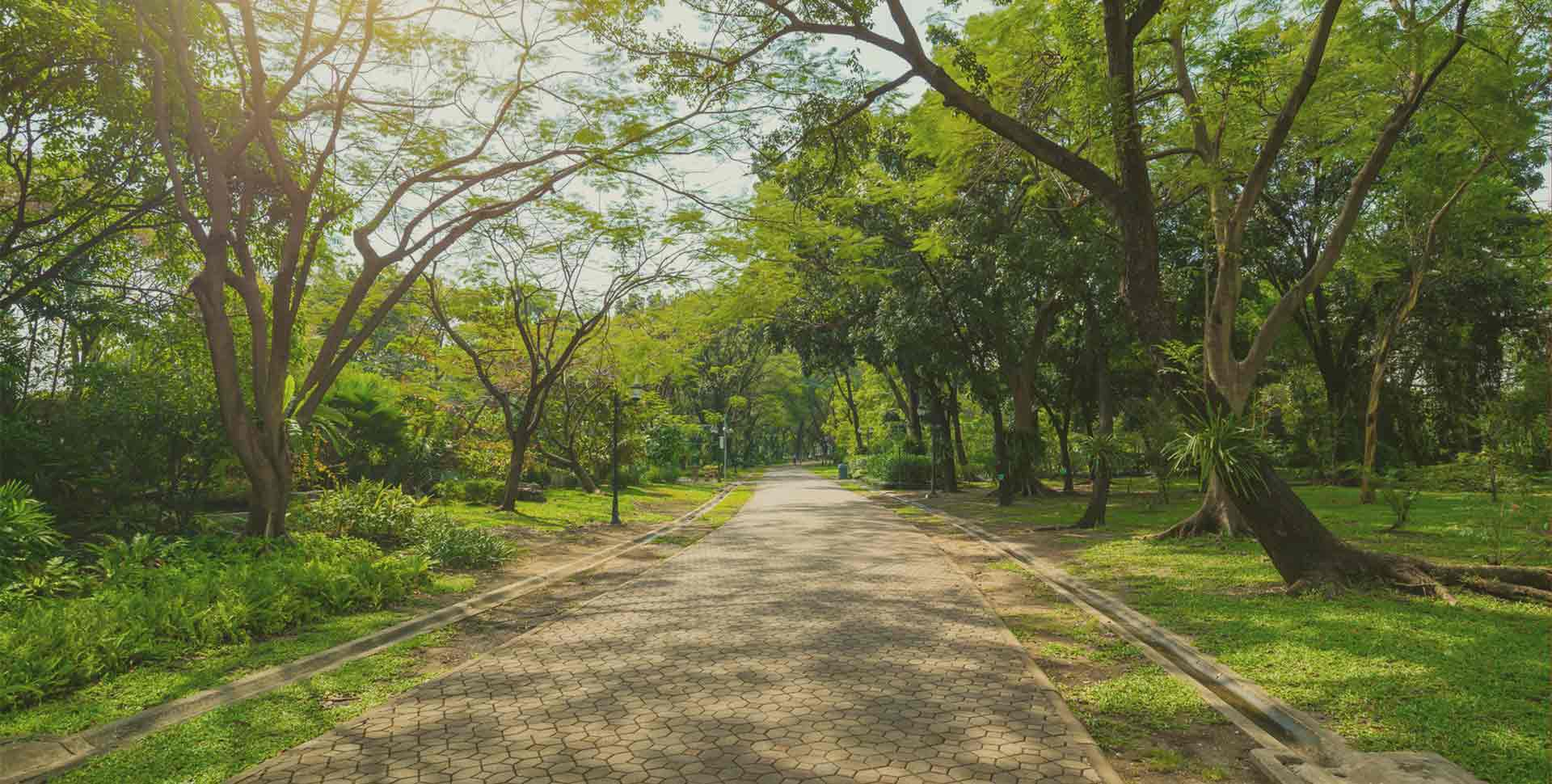 Urban greenway through dense forest