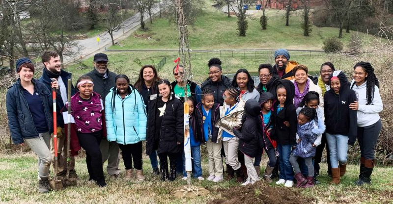 Root Nashville trees being planted by volunteers